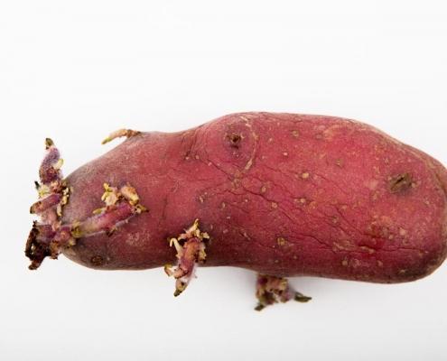 Freigestellte Kartoffel, die aussieht wie ein Wal
